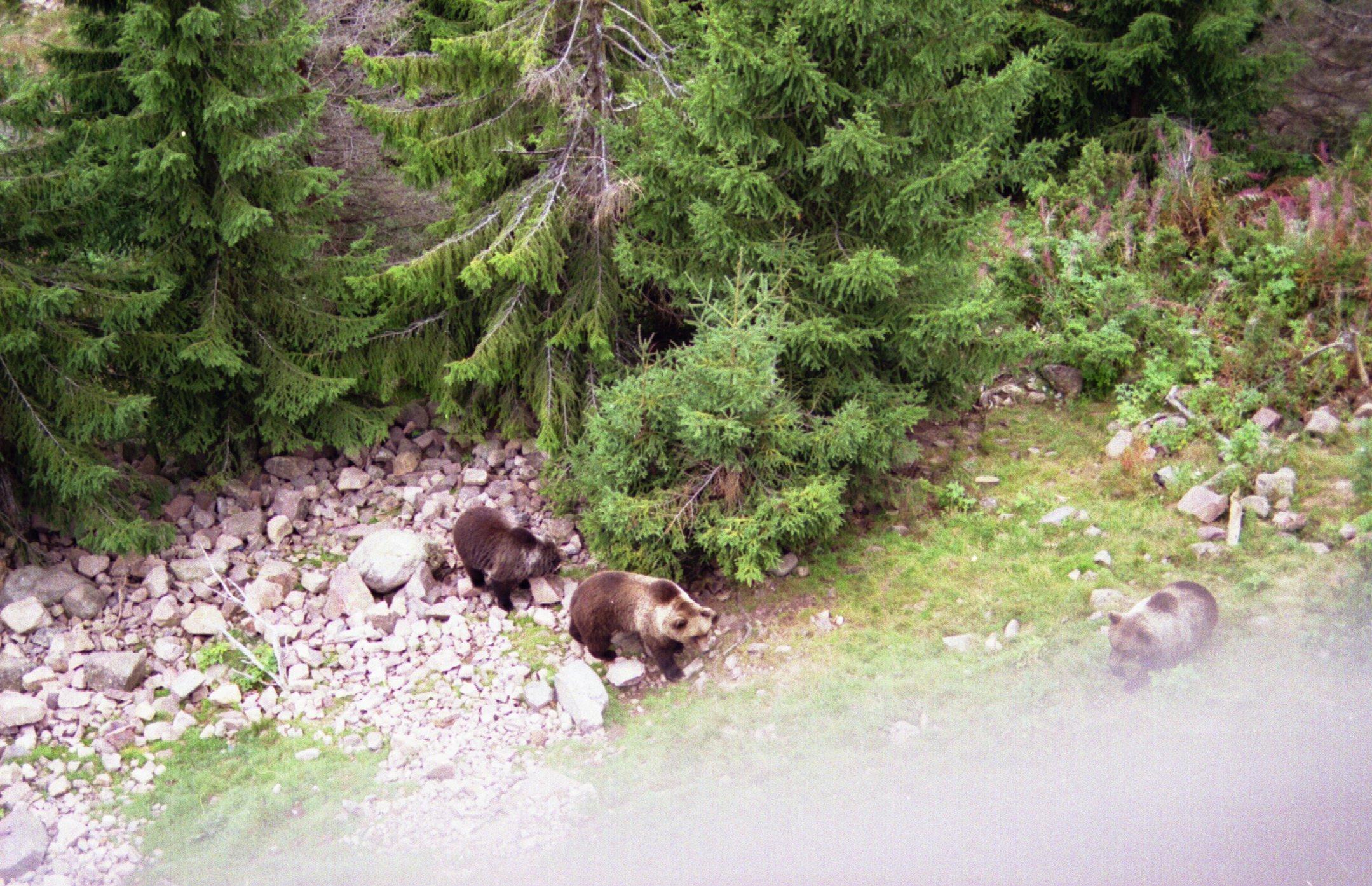 Bärenpark Orsa Grönklitt