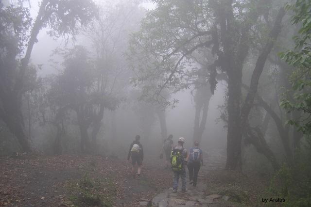 Trekking im Nebel Richtung Dhampus