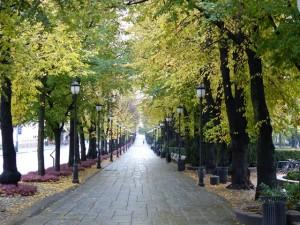 Herbstliche Allee