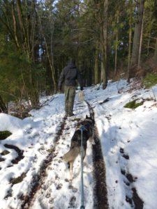 Spaziergang mit Husky