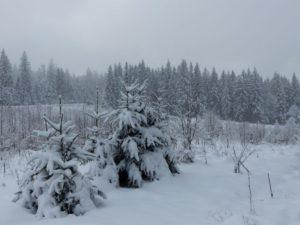 Winterlicher Bayerischer Wald