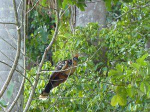 Vögel im Regenwald