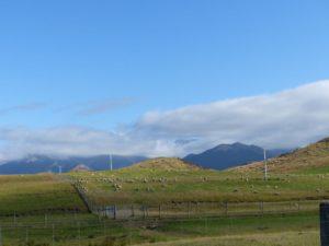 Schafe vor den Neuseeländischen Alpen