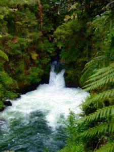 Okere Scenic Reserve